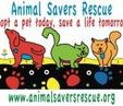 Animal Savers Rescue logo drawing of colorful cats and dogs