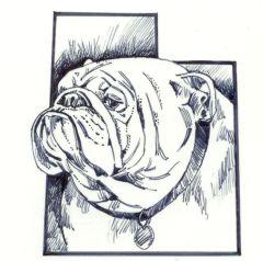 Bulldog Club of Utah Rescue (Herriman, Utah) logo of a bulldog in the outline of the state of Utah