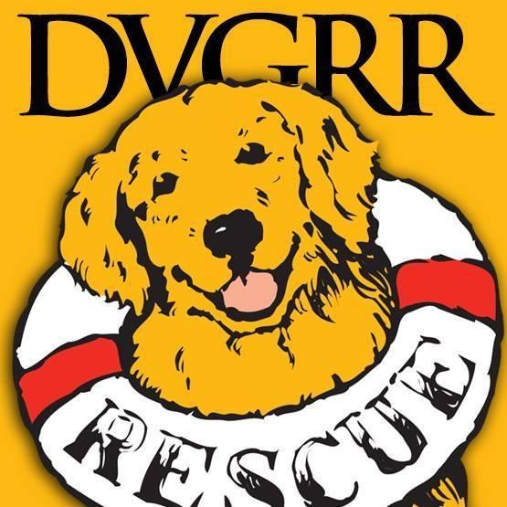 Delaware Valley Golden Retriever Rescue, Inc. (Reinholds, Pennsylvania) logo golden retriever with lifesaving ring around neck