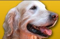 Golden Retriever Club of Greater Los Angeles (Los Angeles, California) logo of dog, house, paws and text