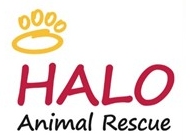 HALO Animal Rescue (Phoenix, Arizona) logo with Gold paw print; HALO is an acronym that stands for Helping Animals Live On