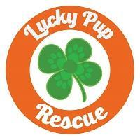 Lucky Pup Rescue SC (Greenville, South Carolina) logo of green shamrock, orange circle and Lucky Pup Rescue
