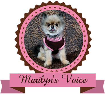 Marilyn's Voice (Mentor, Ohio) logo of dog head with purple collar, half head with text and words, purple background