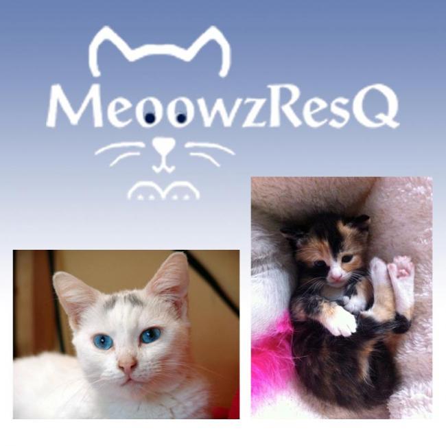 MeoowzResQ (Orange, California) logo outline of cat face