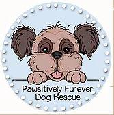 Pawsitively Furever Dog Rescue (Hackensack, New Jersey) logo is a dog face and front paws above the org name in a circle