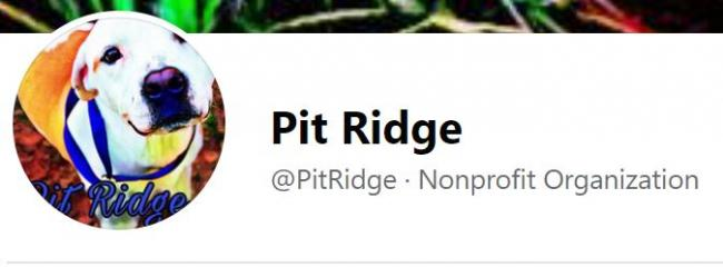 Pit Ridge Rescue, (Rogers, Arkansas) logo dog in color with white face and black text