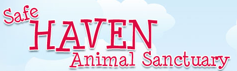 Safe Haven Animal Sanctuary (Las Cruces, New Mexico) logo is the organization name with a clouds and sky background