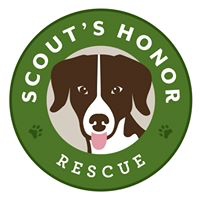 Scout's Honor Rescue (Houston, Texas)   logo of black and white dog, pink tongue, green circle, paw prints, Scout's Honor Rescue