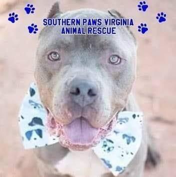 Southern Paws Virginia Rescue (Winchester, Virginia) logo dog in bowtie pawprints
