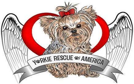Yorkie Rescue of America (Los Angeles, California) logo is a Yorkie with a red bow inside a heart with angel wings
