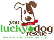 You Lucky Dog Rescue (Alpharetta, Georgia) logo is a brown and white dog with a red collar and shamrock tag and the org name